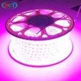 tira rosada ambarina flexible de la luz de la púrpura SMD5050 LED de 120V 230V