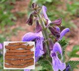 Extrait de fines herbes de Salvia Miltiorrhiza d'extrait de Tanshinol 10%-98% normal Danshen