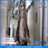 Strumentazione della Camera di macello del bestiame del bestiame con 150 unità al giorno