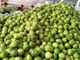 Nuevo pomelo de la miel de la cosecha de la buena calidad
