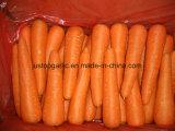 Редиска свежей моркови нового урожая (белая/зеленая)
