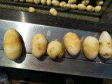 La pomme de terre de la Patate douce de manioc et de la rondelle de Kiwi Peeler