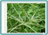 Efficiënt Hericide glufosinaat-Ammonium 200g/L, Herbicide cas-77182-82-2