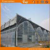 Multi-Span Film Greenhouse для Seeding