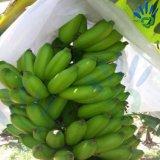 Tela não tecida dos PP Spunbond para a tampa da manga da banana da uva da tampa da fruta