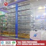 Heißer Verkaufs-Draht-Filetarbeits-Batterie-Vogel-Rahmen mit guter Qualität