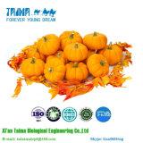 Polvo liofilizado el 100% liofilizado orgánico natural de la calabaza del polvo de la calabaza de la ISO con el mejor precio