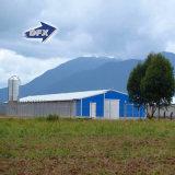 Schizzo industriale poco costoso della tettoia dell'azienda avicola