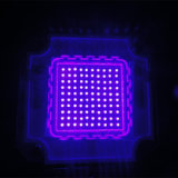 ランプを治す新しい10W 20W 50W 80W 100Wの紫外線黒LEDのフラッドライト365nm-405nm紫外線LED
