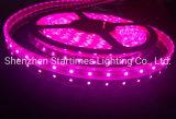 適用範囲が広い滑走路端燈5年は保証LEDの高い明るさ3528の単一カラーLEDクリスマスの装飾LEDの軽い結婚式の装飾ライトをつける