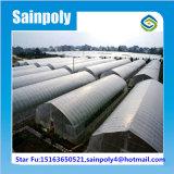 Le plastique de la Chine Manufaturer a couvert la serre chaude de tunnel pour l'aubergine