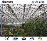 고품질 박공 지붕을%s 가진 Single-Layer 다중 경간 필름 온실