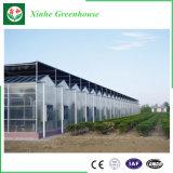 Agricultura Multi-Span Folha oca de policarbonato com efeito de estufa