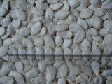 Venta caliente Snow White semilla de calabaza de 15mm