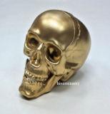Cranio della plastica 4 della decorazione di Halloween '' per la testa del cranio dell'oro del partito di Halloween