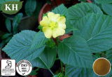 10:1 natural do extrato de Cordifolia do Sida da saúde