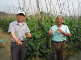 きゅうりの植わることのUnigrowの生物肥料