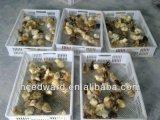 528 ovos de incubação de ovos de galinha automática com aprovado pela CE