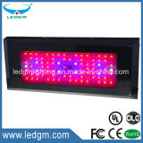 2017 Seedling Growth Greenhouse Red Blue 150W Public garden LED Grow Light