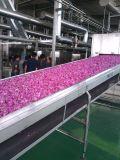 Blumen-trocknende Maschine