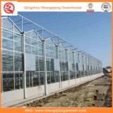 Hortalizas / Jardín / Flores / Granja Multi Span Polycarbonate Sheet Greenhouse