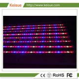 Keisue Professional LED crecer el aparejo de iluminación para el cultivo de Vegtable/flor