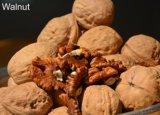À partir de montagnes de Taihang Thin-Skinned alimentaire vert biologique de noix de Grenoble