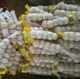 網袋が付いている正常で白いニンニク(4.5cmは活動化し、)