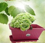 2014緑のタケおよび木の生物分解性の環境に優しい植木鉢