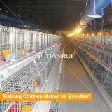 Cage de poulet de bébé de constructeur de la Chine pour la ferme avicole