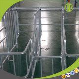 Faltender Schwangerschaft-Stall mit in der Schwein-Züchtung mit zwei Funktionen