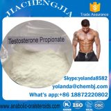 Hochwertiges halb fertiges Steroid Testosteron-Propionat mit 100mg für schnellen Musle Gewinn