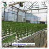 Самый дешевый парник сарая пластмассы цены по прейскуранту завода-изготовителя Китая для Aquaponics