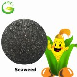 Fertilizante do extrato da alga na agricultura