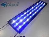 Indicatori luminosi blu e bianchi del serbatoio di pesci del LED dell'acquario