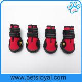 Nouveau design Amazon Hot Sale Pet bottes Souliers de chien