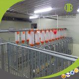 판매에 현대 돼지 농장에서 사용되는 튼튼한 돼지 사슬 자동 공급 시스템