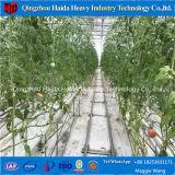 Landbouw Serre voor Soilless Hydrocultuur