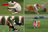 Venda por atacado borracha de silicone suculenta suavidade brinquedo de cachorro de animal de estimação de brinquedo ambiental