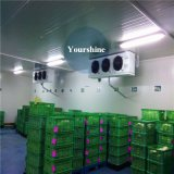 Food Cold STORAGE Cold Room for Logistics