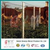 Строб фермы рамки строба панели загородки скотного двора лошади трубчатый