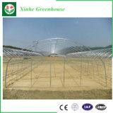 Estufa vegetal da película da película dobro Greenhouses/Po do dobro do arco