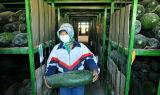 De Koude Zaal van de Plantaardige Opslag van het fruit voor Markt