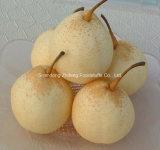 Fruta chino siglo nuevo pera