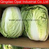 Long de légumes frais Chou chinois