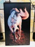 pitture di vetro del cavallo della parete Handmade realistica acrilica di arte (MR-YB17-817)