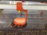 Автоматический слой полного комплекта и оборудование бройлера подавая