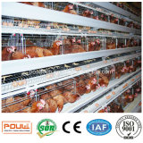 Gaiolas da exploração agrícola de galinha da bateria da capacidade elevada do equipamento das aves domésticas