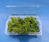 Il contenitore di imballaggio di plastica di Wholes del fornitore della Cina per l'OEM della verdura accetta