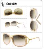 De Zonnebril van de manier (7304 1-1)